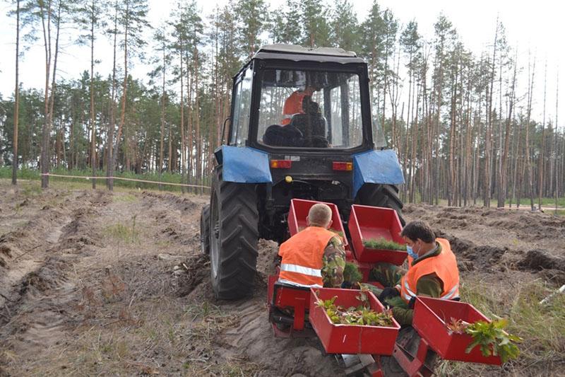 У Черкаському лісгоспі цієї весни 100 гектарів лісових культур створять механізовано