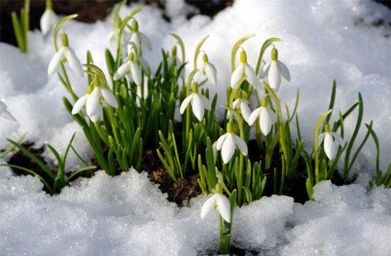 До четверга на Черкащині переважатиме морозна погода