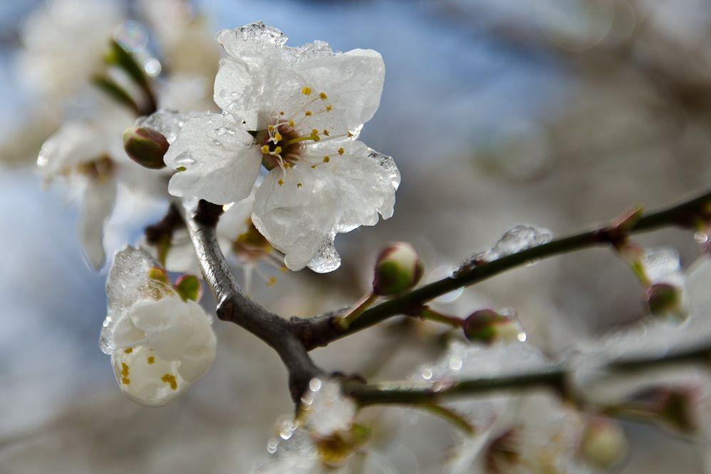 Сьогодні в регіоні прогнозують дощі з грозами