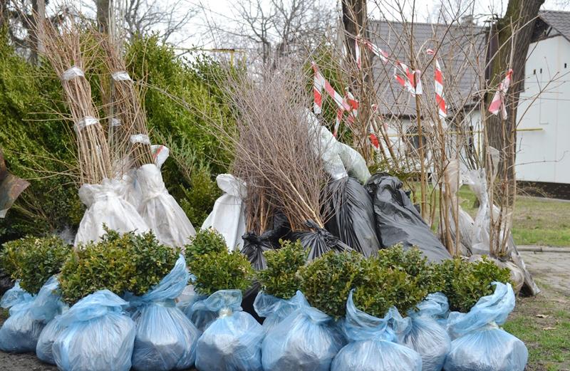 Черкаські лісівники передали 400 саджанців дерев та кущів для озеленення Авдіївки