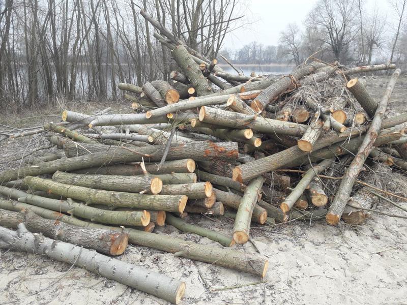 У Свидівку самовільно зрубали понад 300 дерев