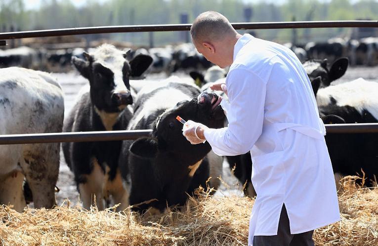 На Черкащині розпочали планові огляди тварин
