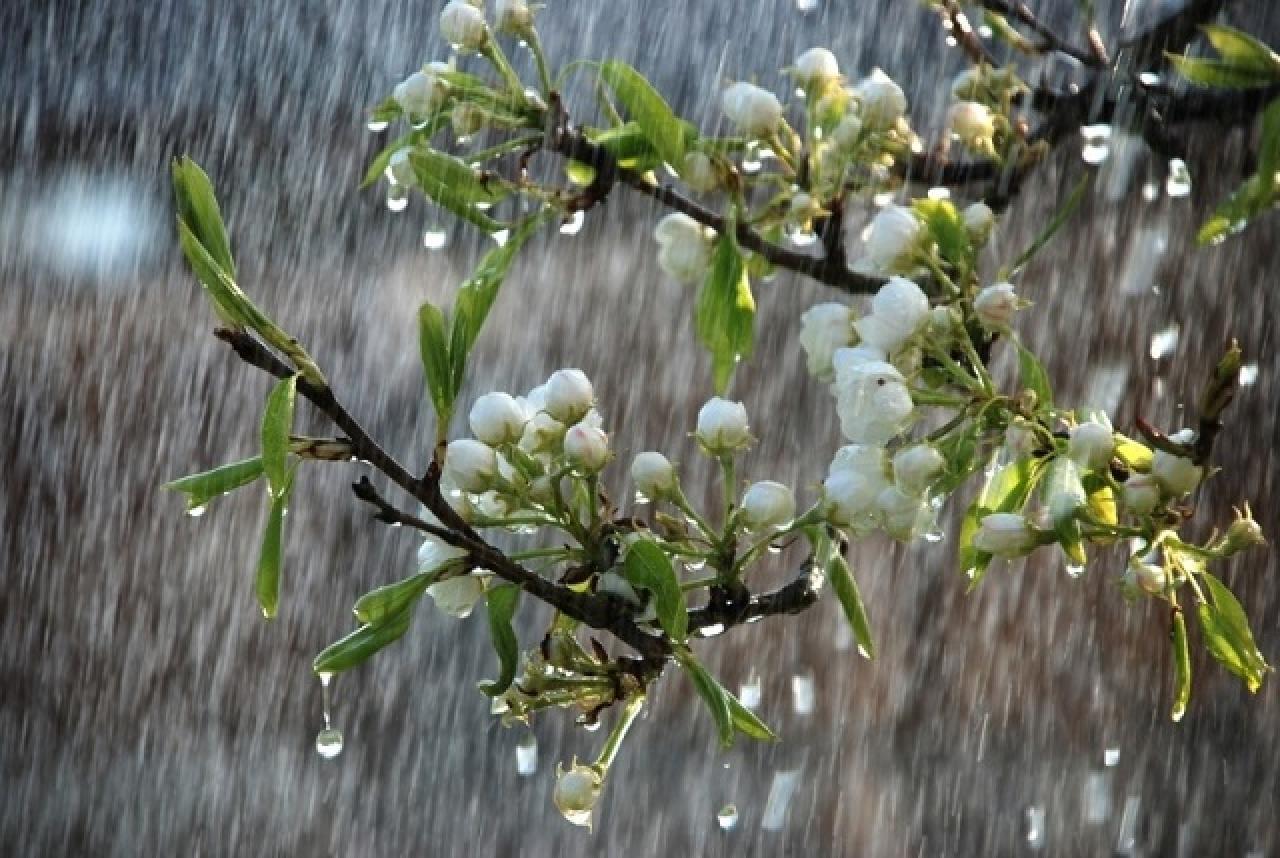 В області погода буде дощовою