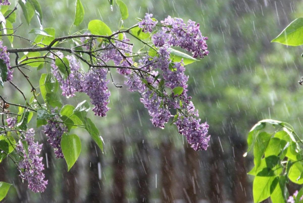 Із вівторка на Черкащині прогнозують дощі, грози та град