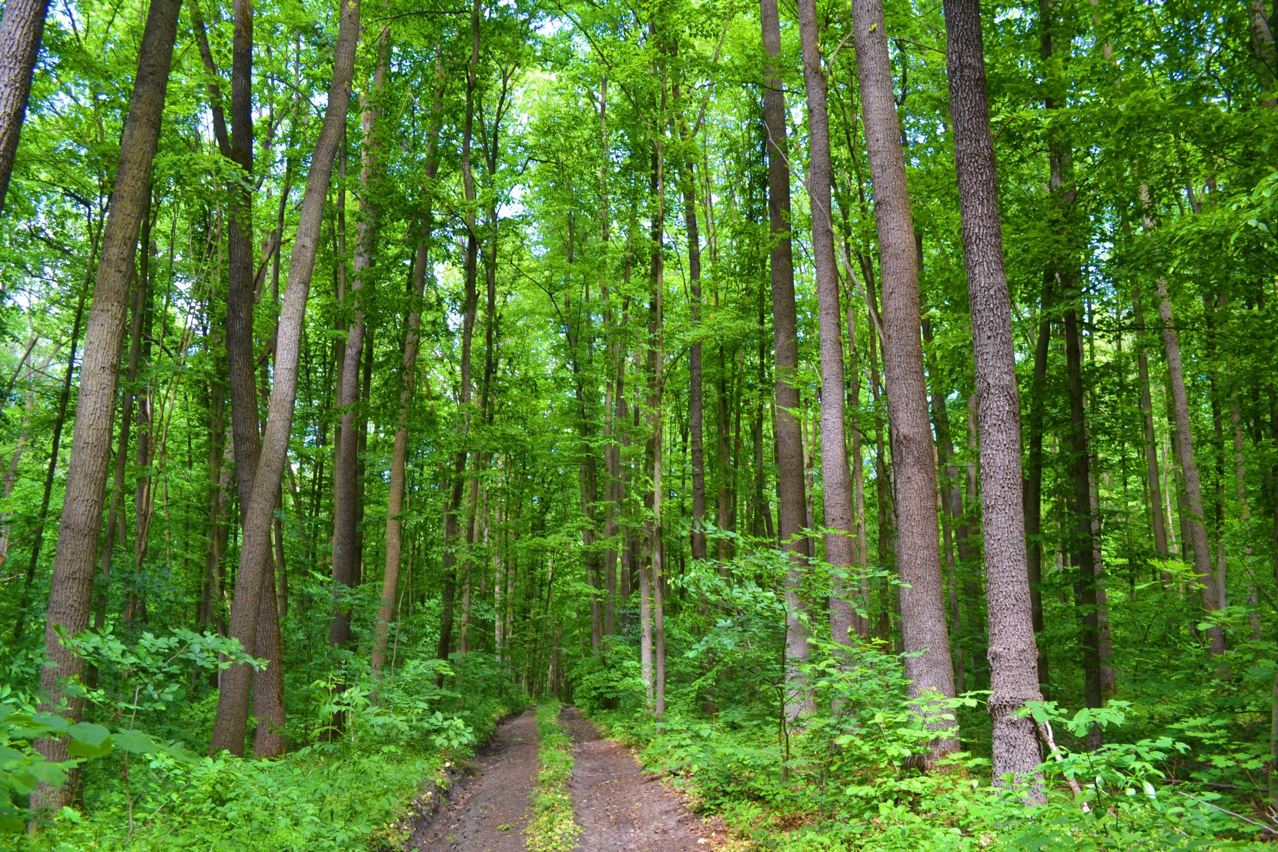 Майже тисячу гектарів лісів висадили на Черкащині (ВІДЕО)
