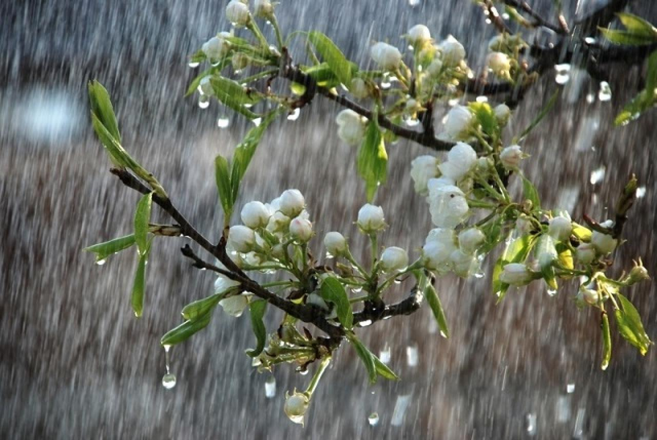 На вихідних у регіоні дощитиме