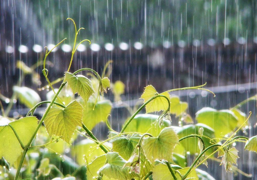 Понеділок у регіоні прогнозують із дощами та грозами