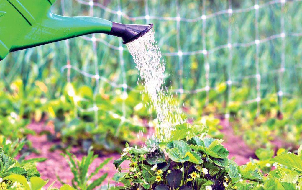 Смілянам заборонили поливати городи питною водою