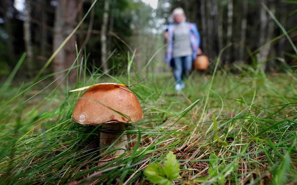 Черкащанка потрапила в реанімацію через отруєння грибами