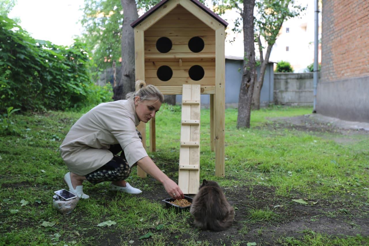 У Черкасах встановили ще три будинки для вуличних котів
