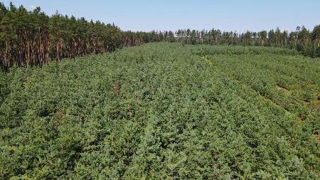 На Черкащині триває активна робота щодо збільшення лісистості
