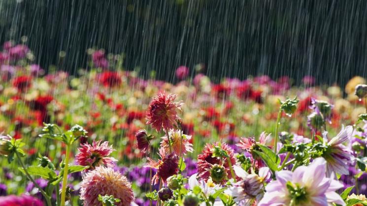 Без істотних опадів: погода на Черкащині в середу