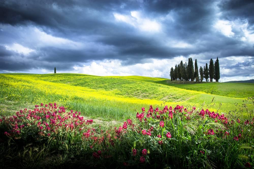 У середу в області прогнозують помірні дощі та грози