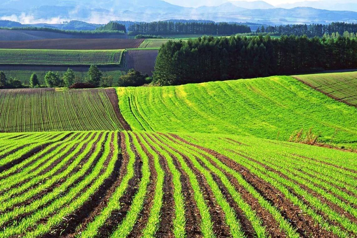 Ринок землі: які повноваження мають громади