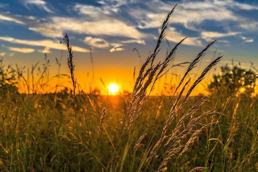 Погода на Черкащині порадує комфортним теплом