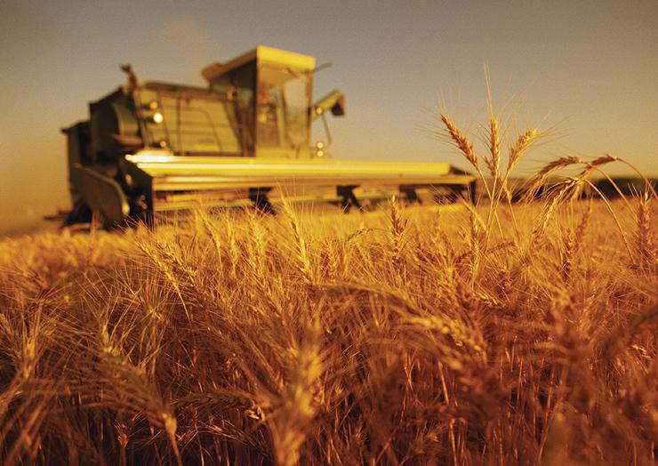 У Черкаській області завершують збір ранніх зернових та зернобобових культур