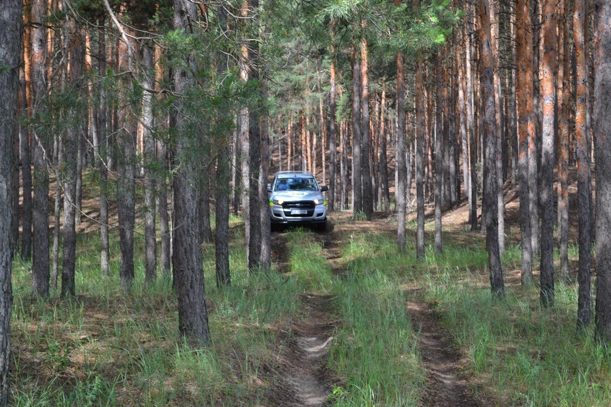 15 випадків нелегальної вирубки дерев зафіксували на Черкащині