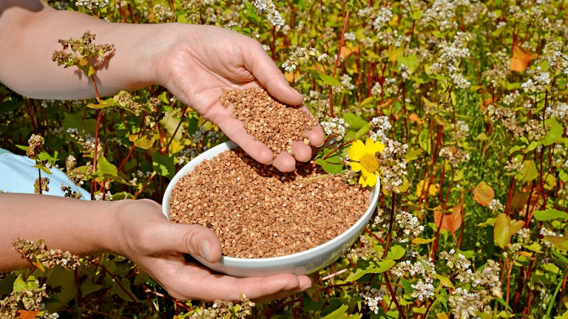 Аграрії, які вирощують нішеві культури, отримають компенсацію від держави