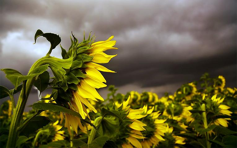 Дощі й грози прогнозують у середу на Черкащині
