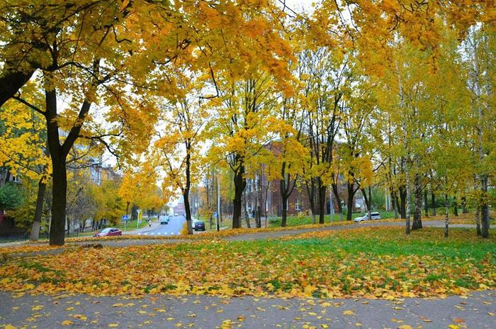 Сьогодні на Черкащині прогнозують невеликі дощі