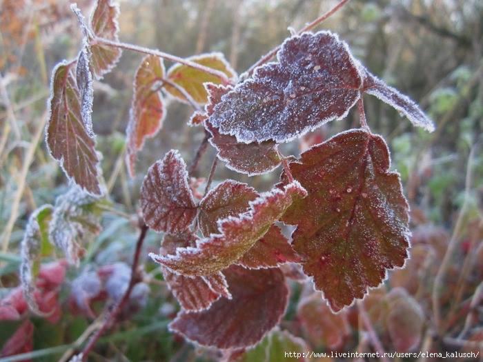 У Черкаській області прогнозують заморозки