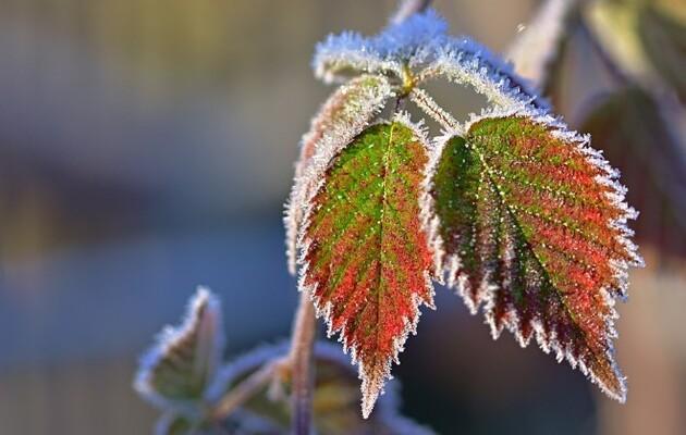 Заморозки на Черкащині прогнозують із початку нового тижня