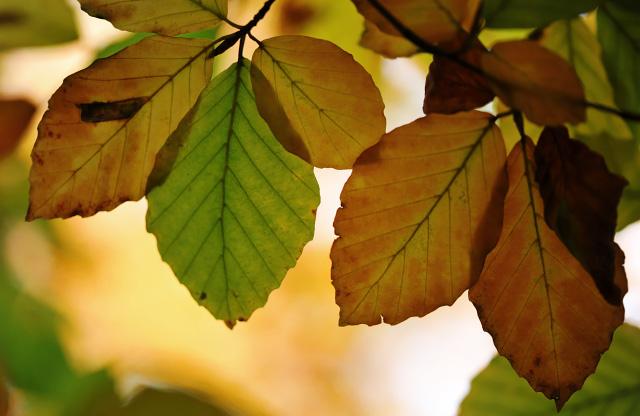 Якою буде погода у вересні на Черкащині?