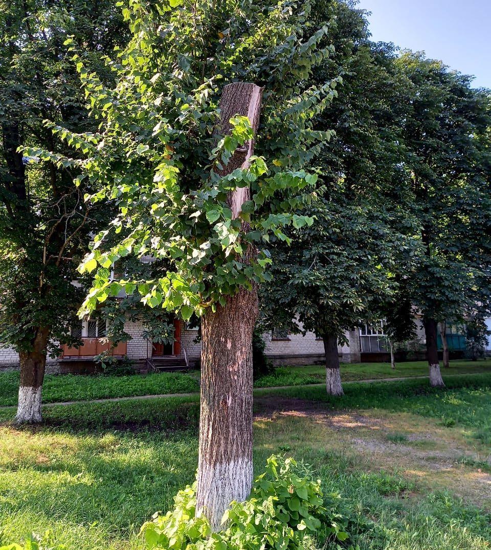 70 тисяч гривень сплатять порушники на Черкащині за вируб і пошкодження дерев