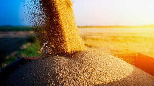 Черкащина – серед лідерів за врожайністю зернових в Україні