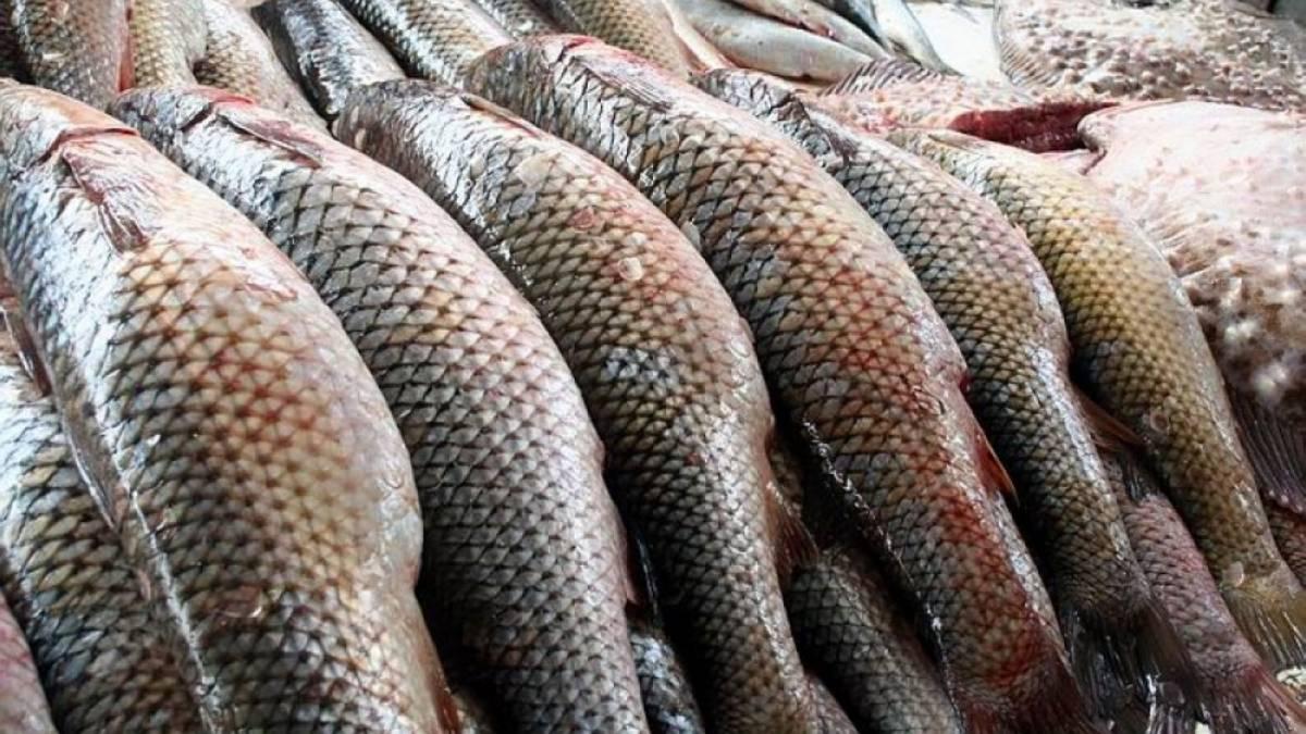 В Україні збільшилися санкції за незаконний вилов риби