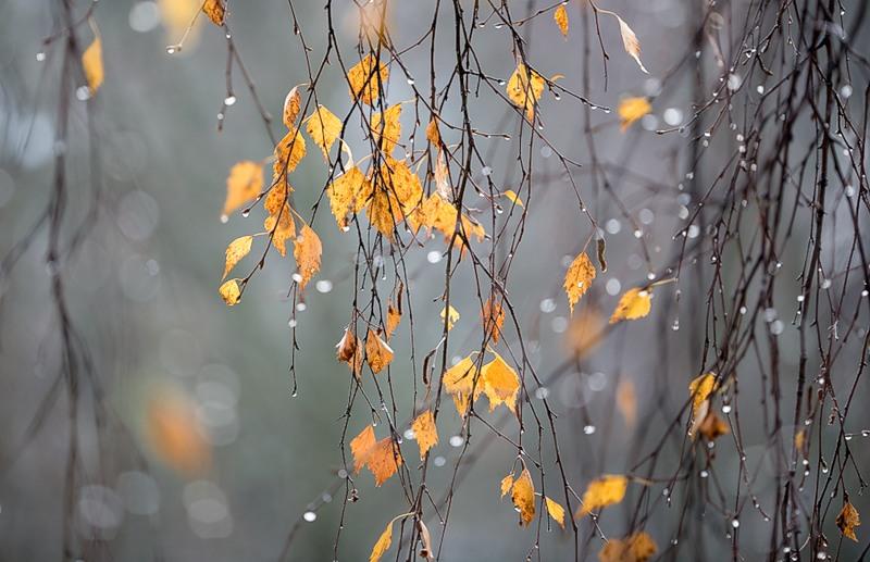Сьогодні в області прогнозують значні дощі